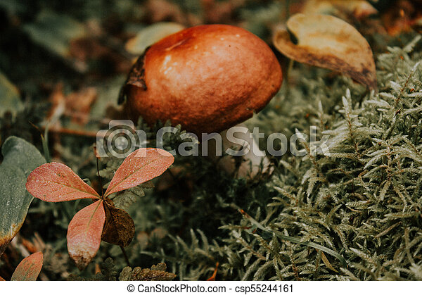 A lone mushroom growing in moss in the forest - csp55244161