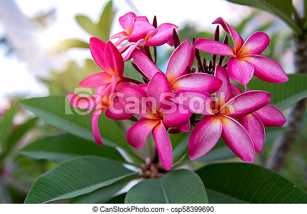 A Lot Of Beautiful Colourful Flowers Growing In The Tropics Exotic