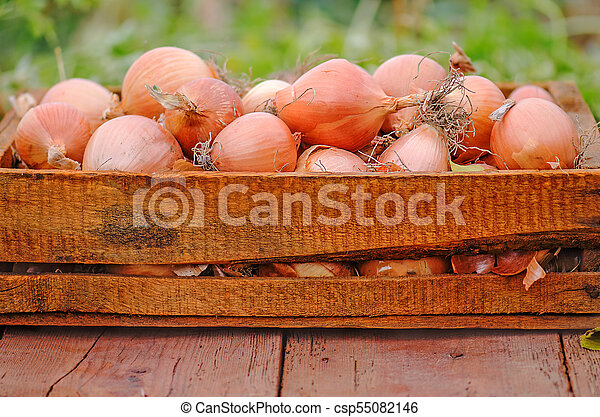 A lot of onions in crate - csp55082146
