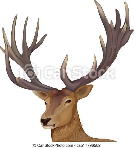 A male deer - csp17796582