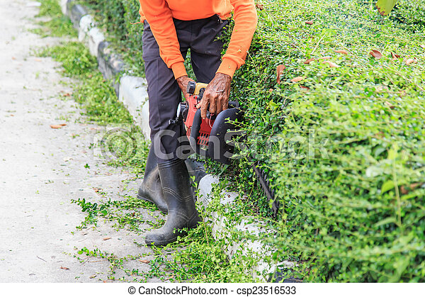 A man trimming hedge at the street - csp23516533