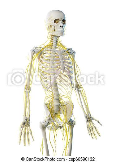 a mans nervous system - csp66590132