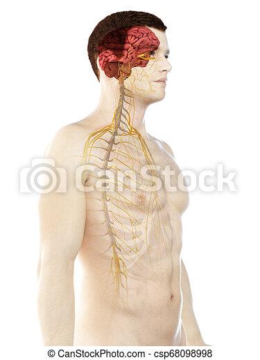 a mans nervous system - csp68098998