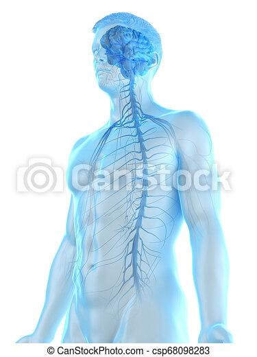 a mans nervous system - csp68098283