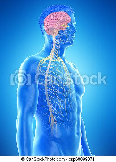 a mans nervous system - csp68099071