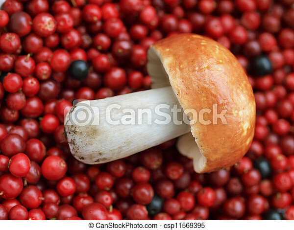 A mushroom and cranberries - csp11569395