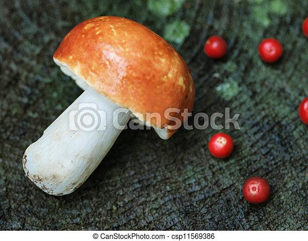 A mushroom with few cranberrie - csp11569386