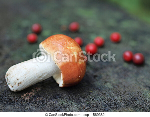 A mushroom with few cranberries - csp11569382