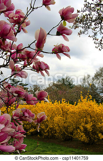 A park in spring - csp11401759