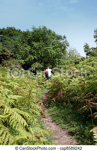 A photographer walking through the ferns - csp8589242