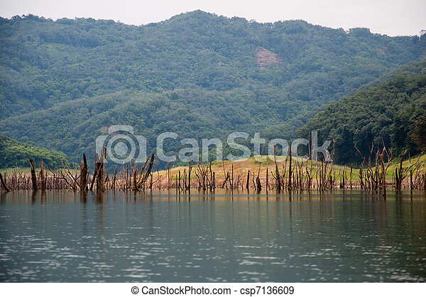 a picture of beautiful natural forest wood tree - csp7136609