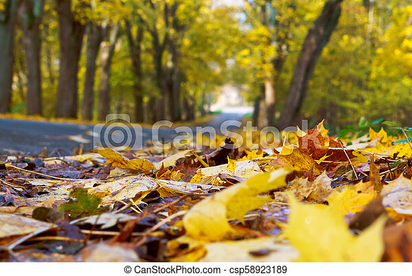 a picturesque autumn highway, trees with yellow leaves on the road - csp58923189