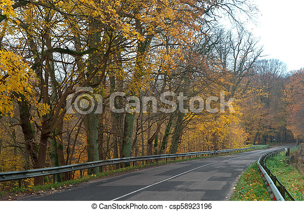 a picturesque autumn highway, trees with yellow leaves on the road - csp58923196