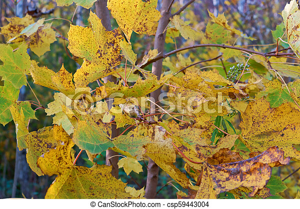 a picturesque autumn highway, trees with yellow leaves on the road - csp59443004