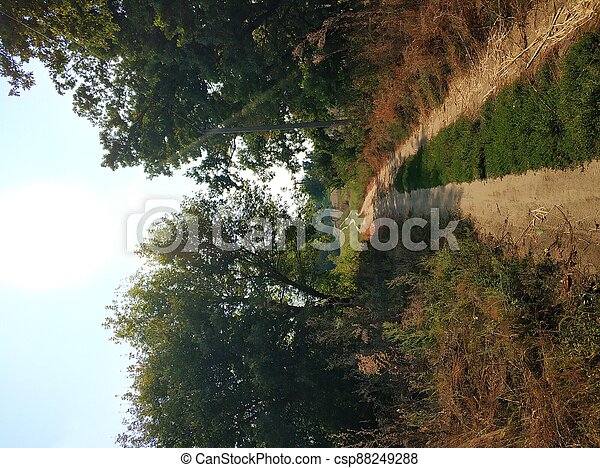 A picturesque country road in the village - csp88249288