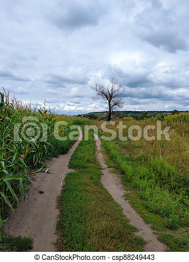 A picturesque country road in the village - csp88249443