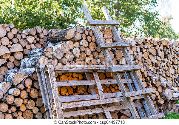 A Pile of Logs in the Backyard on the Sunny Summer Evening - csp64437718