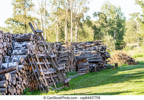 A Pile of Logs in the Backyard on the Sunny Summer Evening - csp64437705