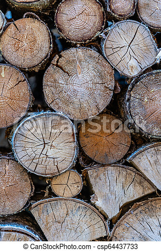 A Pile of Logs in the Backyard on the Sunny Summer Evening - csp64437733