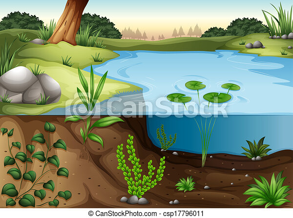 A pond ecosytem - csp17796011