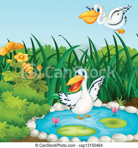 A pond with ducks - csp13150464