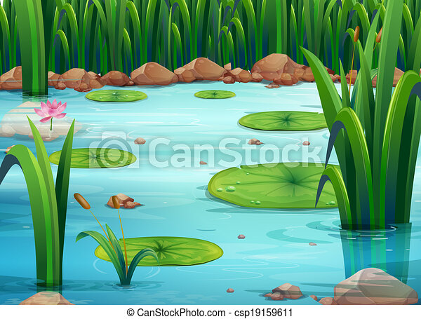 A pond with green plants - csp19159611