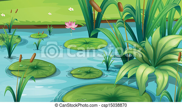 A pond with many plants - csp15038870