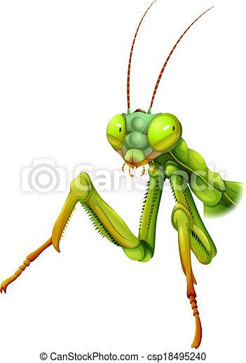 A Praying Mantis Illustration Of A Praying Mantis On A White