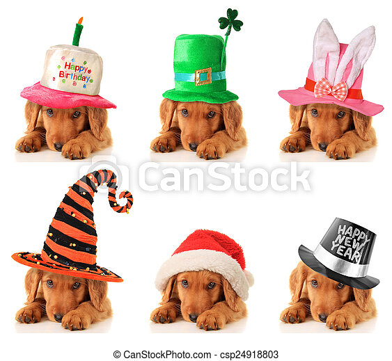 A puppy for every occasion - csp24918803