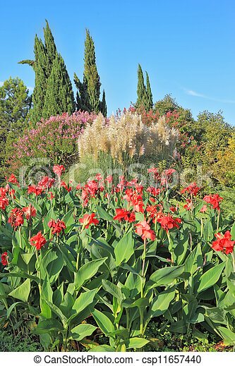 A red flowers and decorative reeds - csp11657440