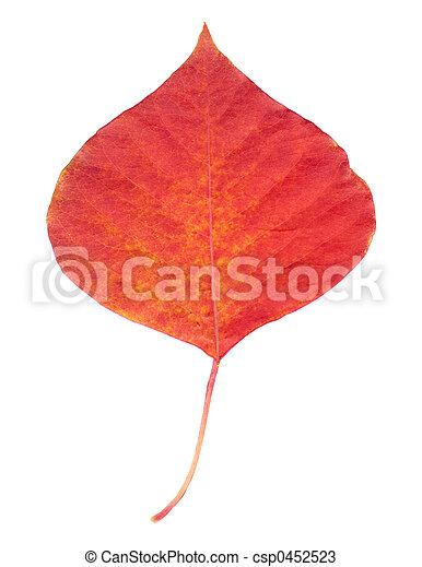 A Red Leaf - csp0452523