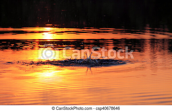 a reflection of the sun - csp40678646