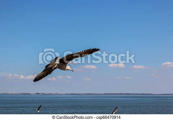 A seagull flying over the sea - csp66470914