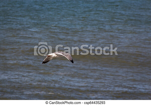 A seagull flying over the sea, Portugal - csp64435293