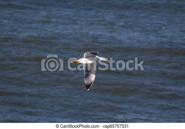 A seagull flying over the sea - csp65707531