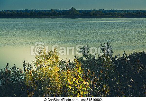 A seagull sits on the surface of a forest lake - csp61519902
