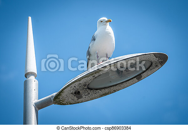 A Seagull Sitting On Top Of A Street Light With Spikey Lamp Post - csp86903384