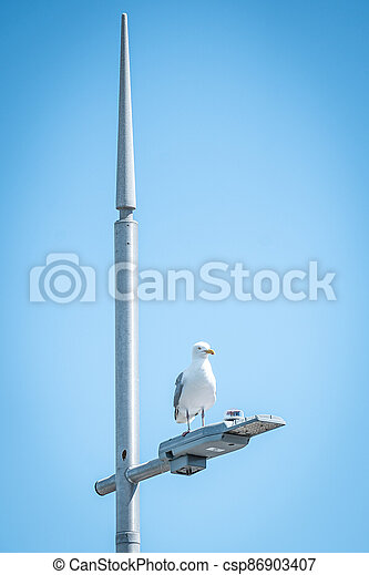 A Seagull Sitting On Top Of A Street Light With Spikey Lamp Post - csp86903407