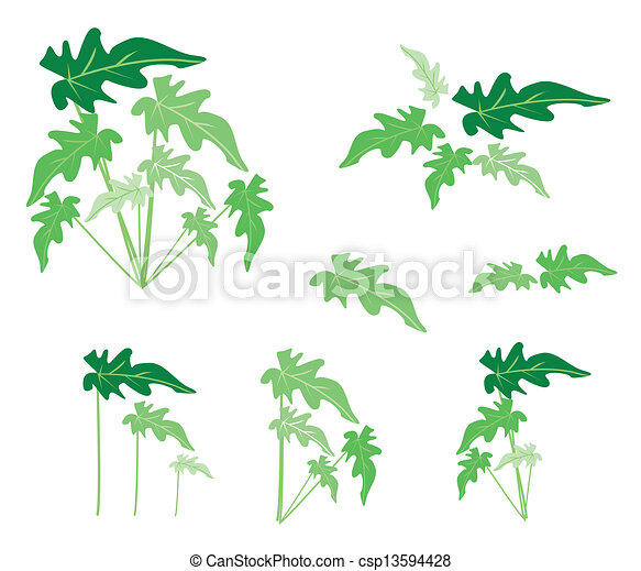 A Set of Philodendron Leaves on White Background - csp13594428