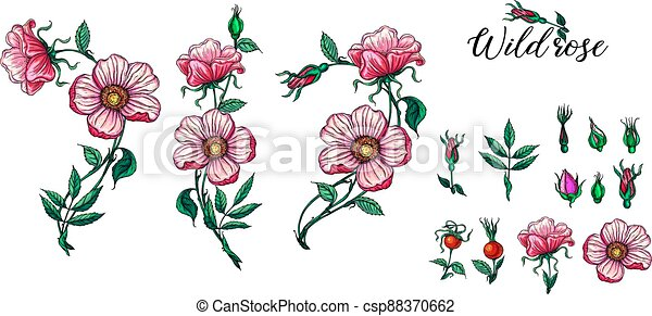 A set of vector flower compositions. Rose. Pink. - csp88370662