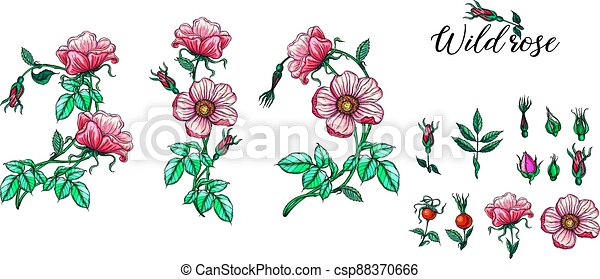 A set of vector flower compositions. Rose. Pink. - csp88370666