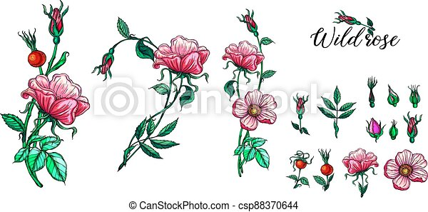 A set of vector flower compositions. Rose. Pink. - csp88370644