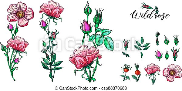 A set of vector flower compositions. Rose. Pink. - csp88370683