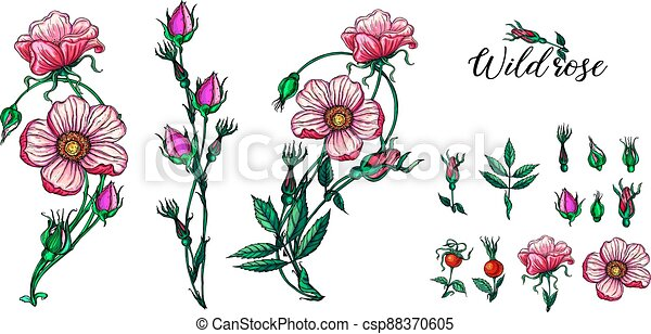 A set of vector flower compositions. Rose. Pink. - csp88370605