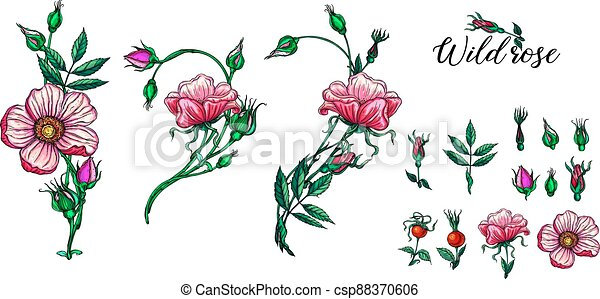 A set of vector flower compositions. Rose. Pink. - csp88370606
