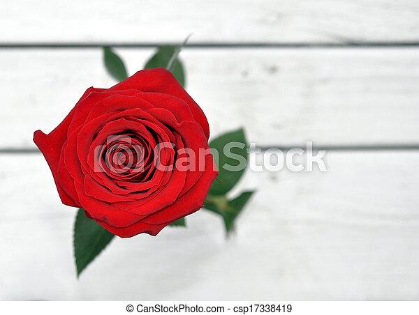 a single rose - csp17338419
