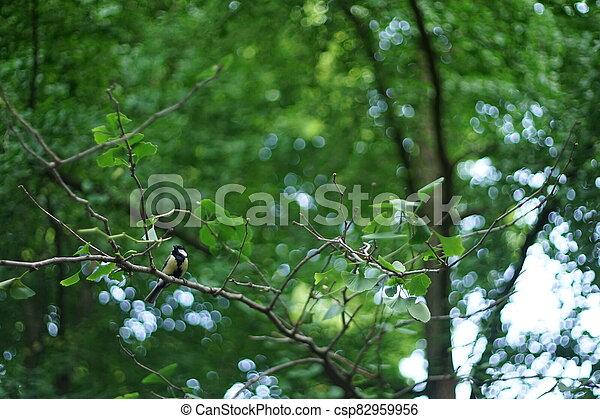 A small chickadee resting o a tree branch. - csp82959956