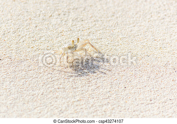 A Small Crab on the Beach - csp43274107
