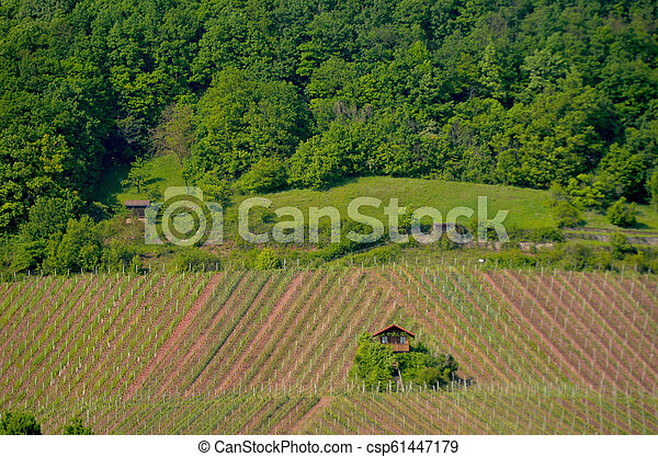 A small farm house surrounded by vineyards. - csp61447179