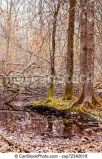 a small lake in the forest - csp72340018